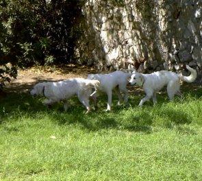 Texas Pups